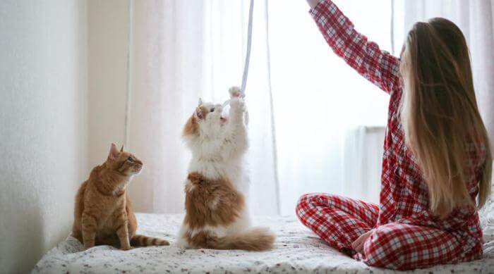 Shutterstock: woman using string to play with two cats