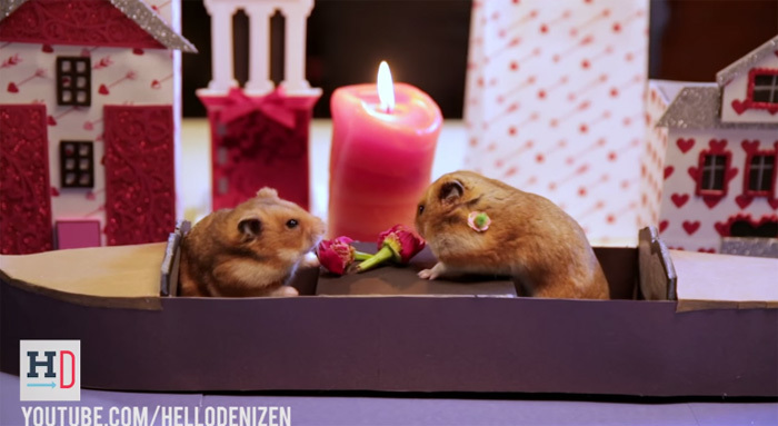 Bouquets for a hamster couple