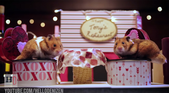 Hamster dinner table set for two
