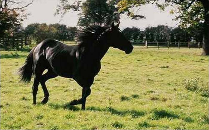 Black Beauty from the 1994 film Black Beauty