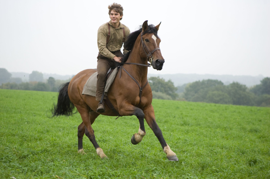 The horse Joey from the 2011 movie War Horse