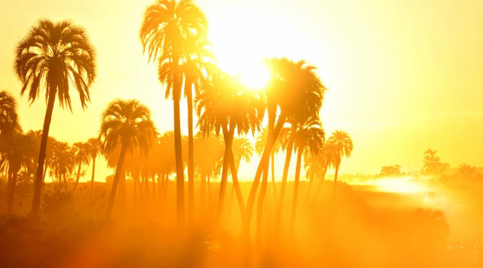 Sun hidden behind palm trees