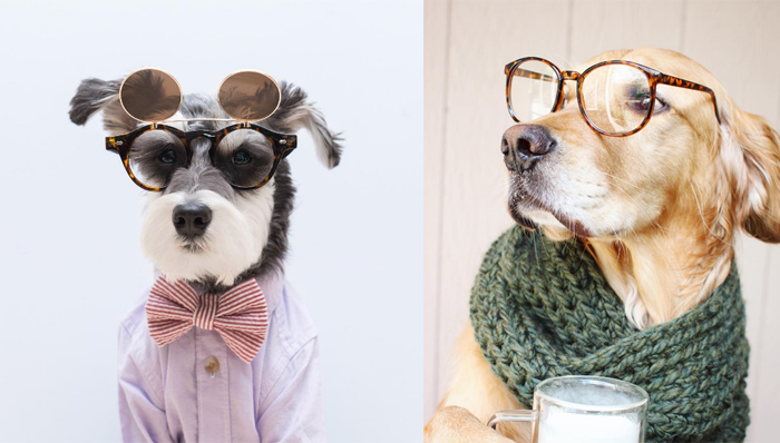 Remix and Rusty Rodas, two of the most stylish dogs on Instagram