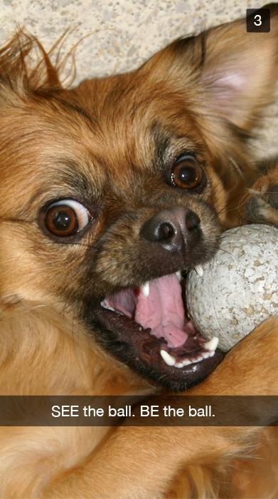 A dog biting into his ball