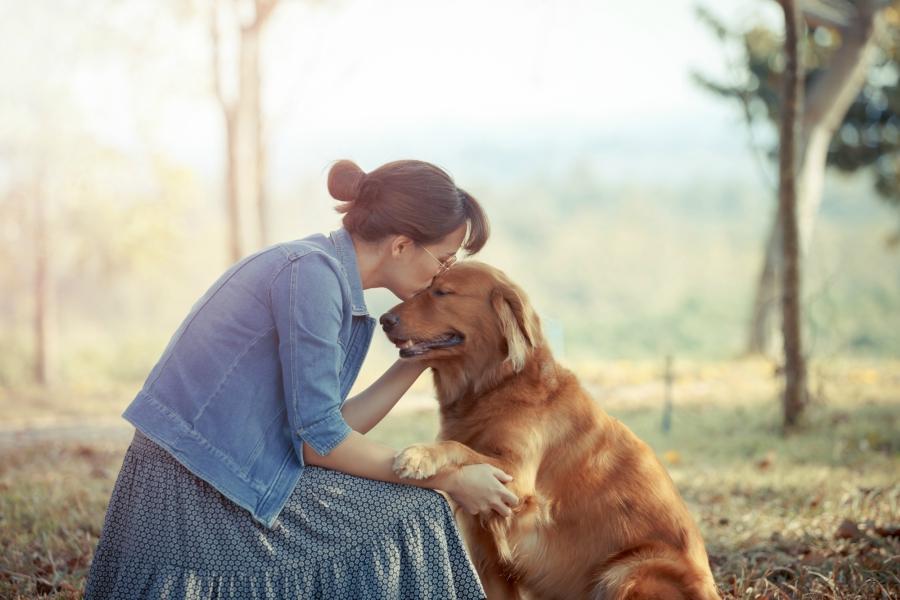 Girl kissing Golden Retriever dog on the head