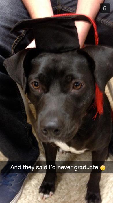 A dog graduating from dog school