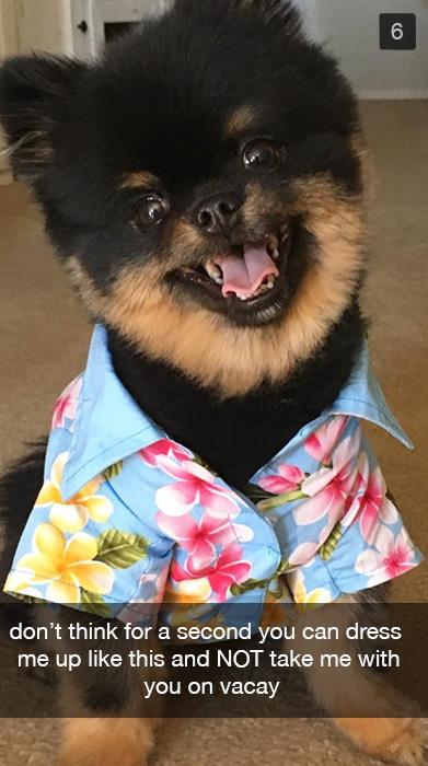 Dog dressed in a Hawaiian shirt