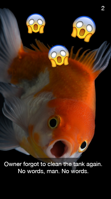 Fish with its mouth wide open