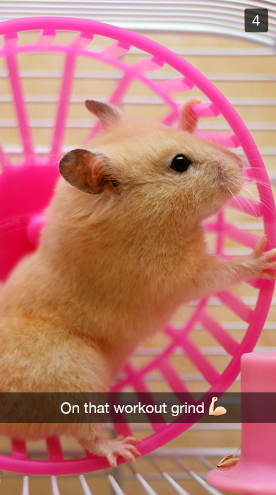 A hamster working out on his spinning wheel