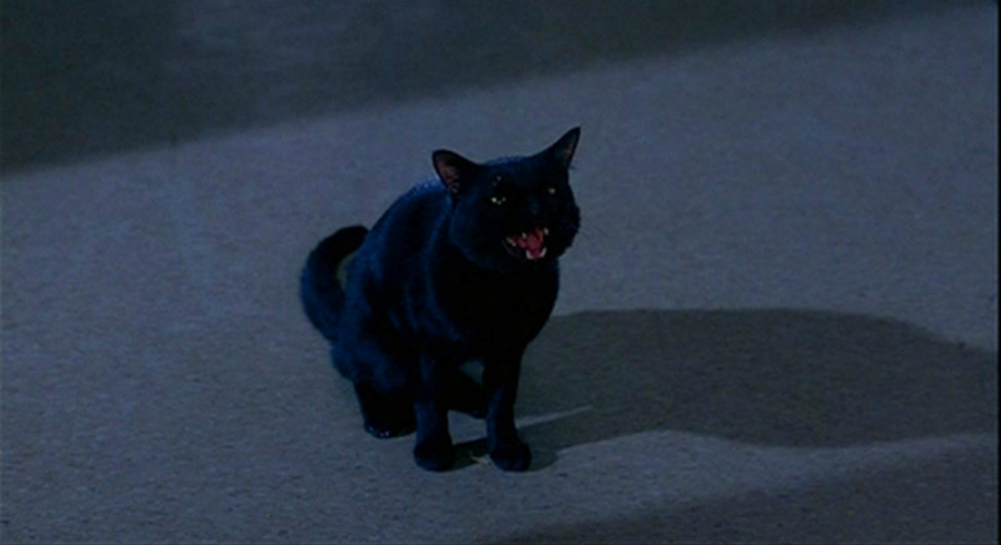Binx from Hocus Pocus meowing