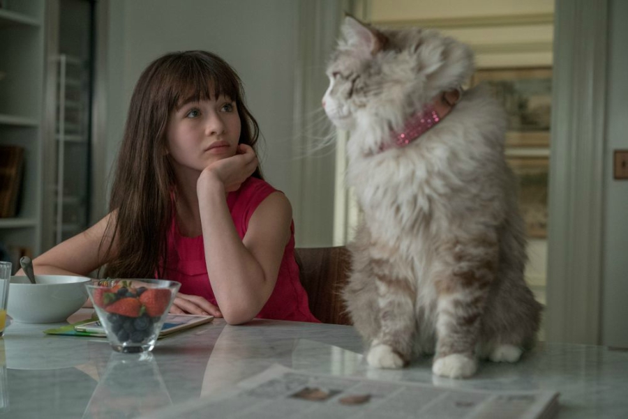 Girl staring at her fluffy gray and white cat while it is on the countertop