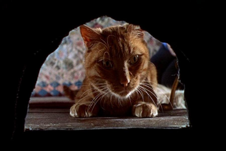 Orange tabby cat from Walt Disney's The Three Lives of Thomasina