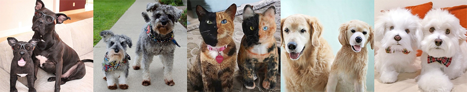 Cats That Looked Like Stuffed Animals