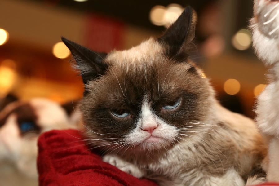 Grumpy Cat being held by Santa Claus