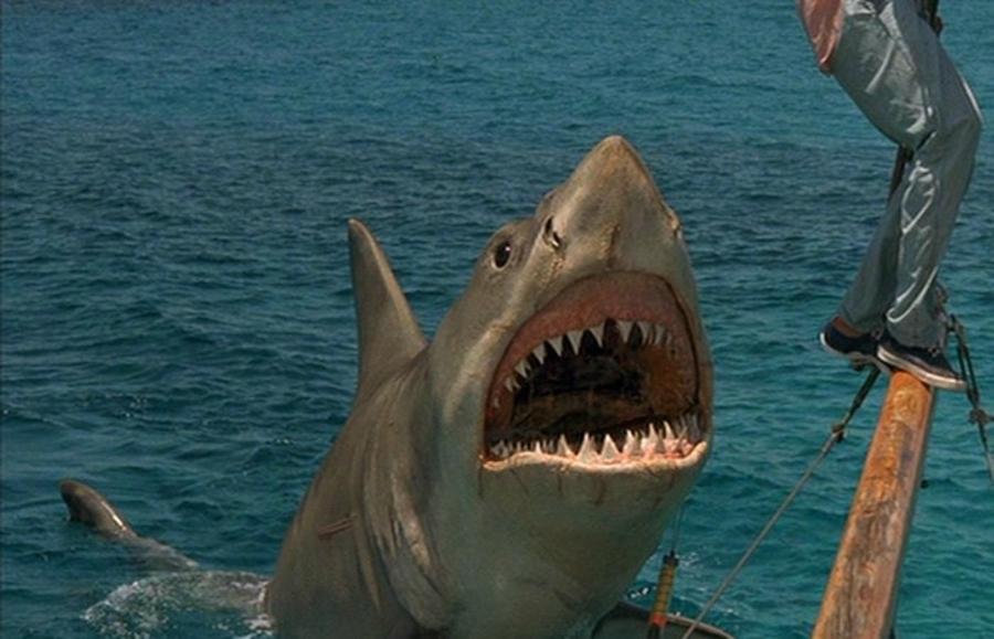 """Still from """"Jaws"""" movie"""