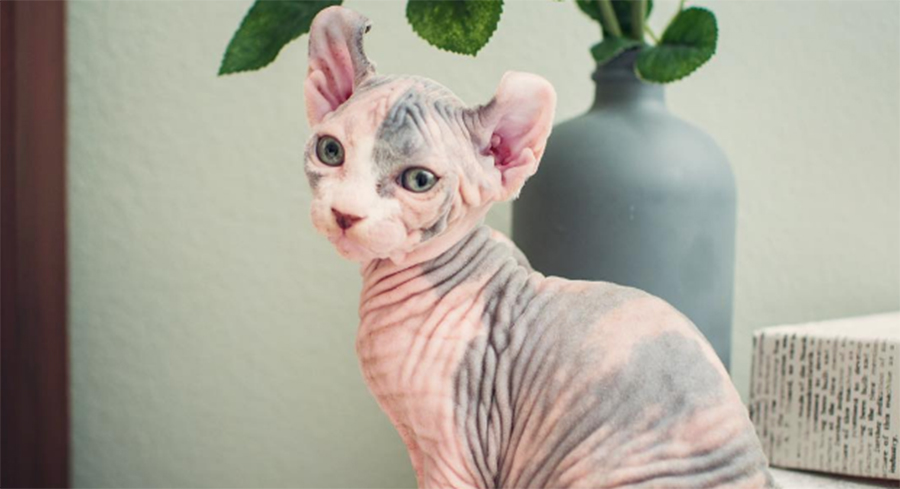 Bald Dogs And Cats