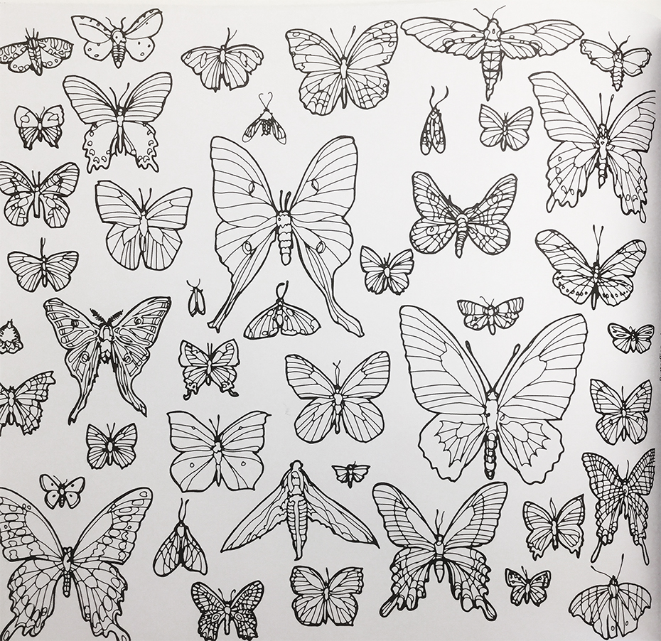 Fantastic Collections coloring book: butterfly coloring page