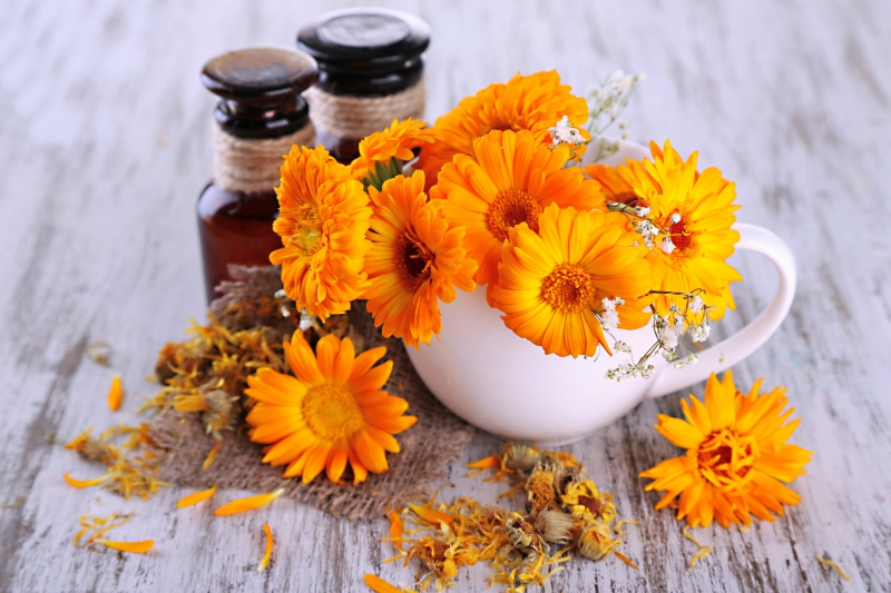 Calendula flowers in a tea cup next to vials of essential oils
