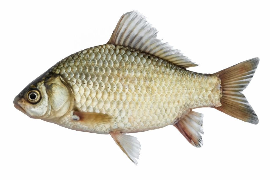 Bizarre beauty product ingredients for Fish without scales