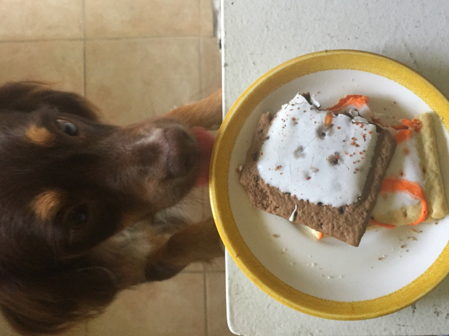 Dog wants to try Pop Tarts