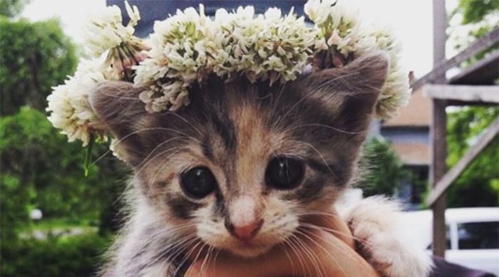 Flower Crown Kitten