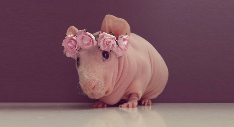 Interview With Ludwik The Skinny Pigs Pet Parent, Agata-3808