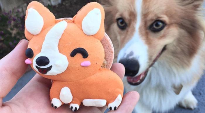 Large corgi macaron next to a dog