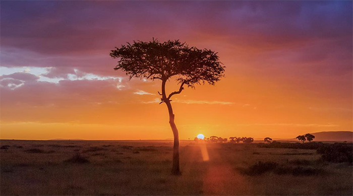 Sunset over the Savannah in Johannesburg, South Africa