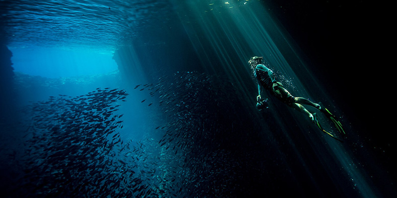 Photographer capturing a picture of a school of fish underwater in Tales by Light