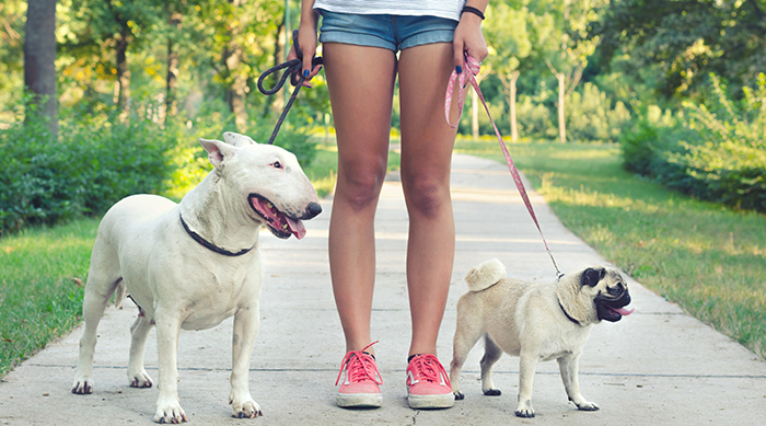 Teen girl walking two dogs