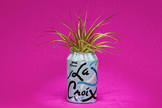 La Croix Planter