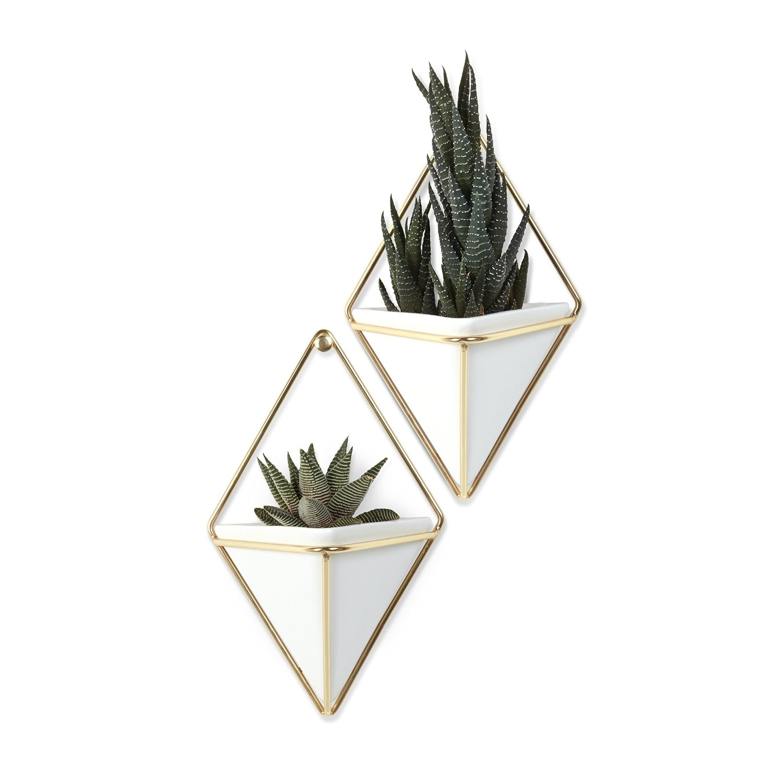 Plant display hangers