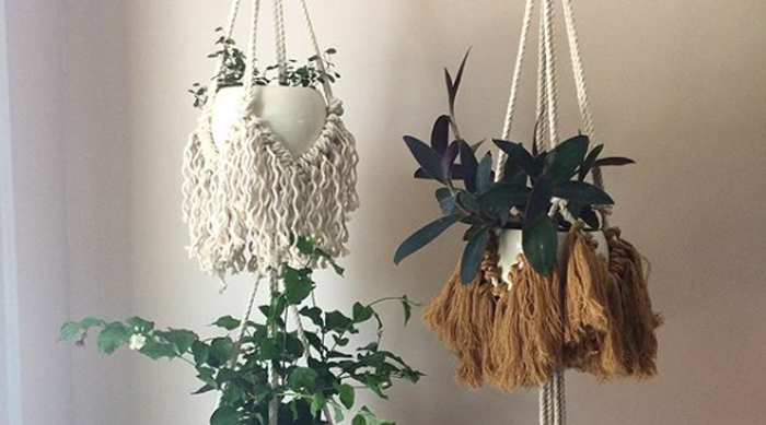 Indoor Jasmine Hanging Plant Good For Sleep