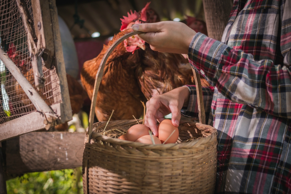 cliches-eggs-basket-082217