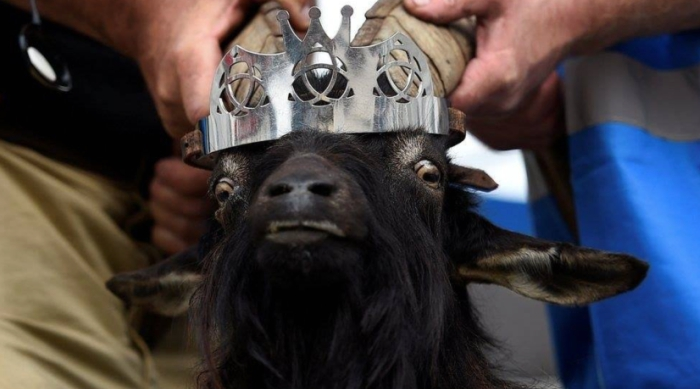 Goat With Crown