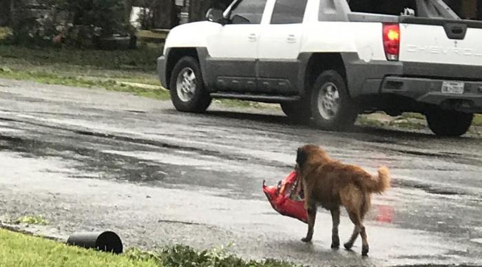 Otis Carrying His Dog Food