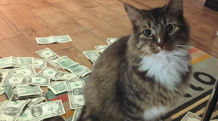 Cashnip Kitty With His Stolen Cash