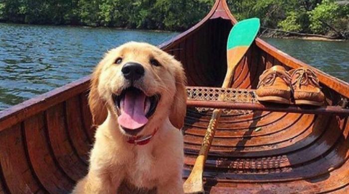Puppy in a canoe
