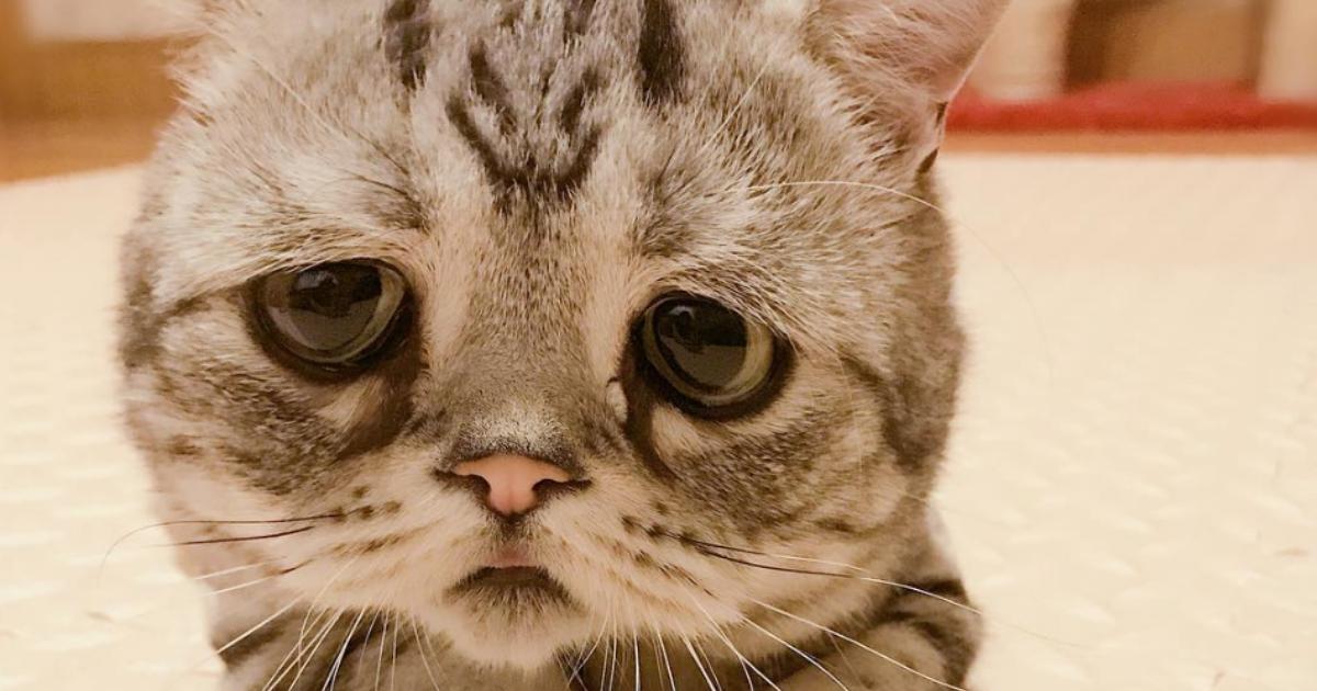 Luhu the Cat