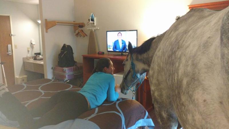 Horse in Motel Room