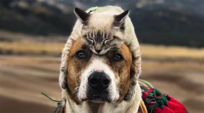Cat Hugging a Dog's Head