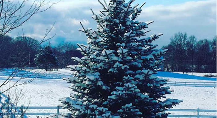 Christmas tree covered in snow