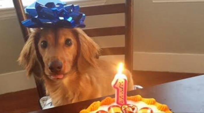 Cute dog birthday cake