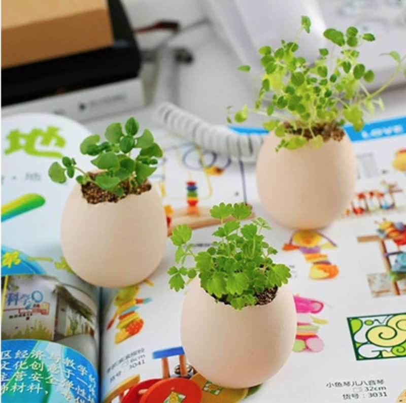 Egg-shaped plant holders