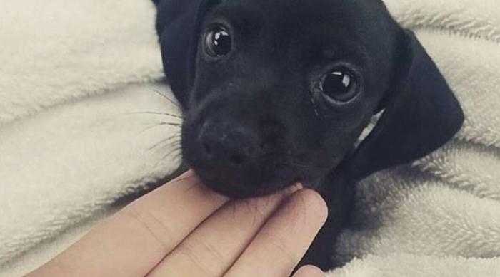 Tiny Dog With Hand