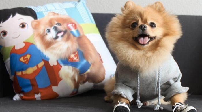 LifeGoesPop pomeranian pillow