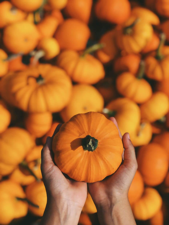 Pumpkin boyd