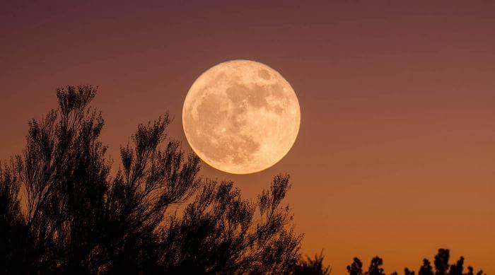 Unsplash: Full moon against trees