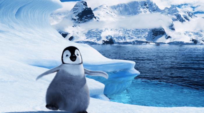 Happy Feet: Penguin dancing