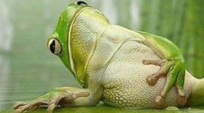 Instagram: Frog clutching stomach meme image